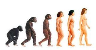 Evolution - Homo Sapiens